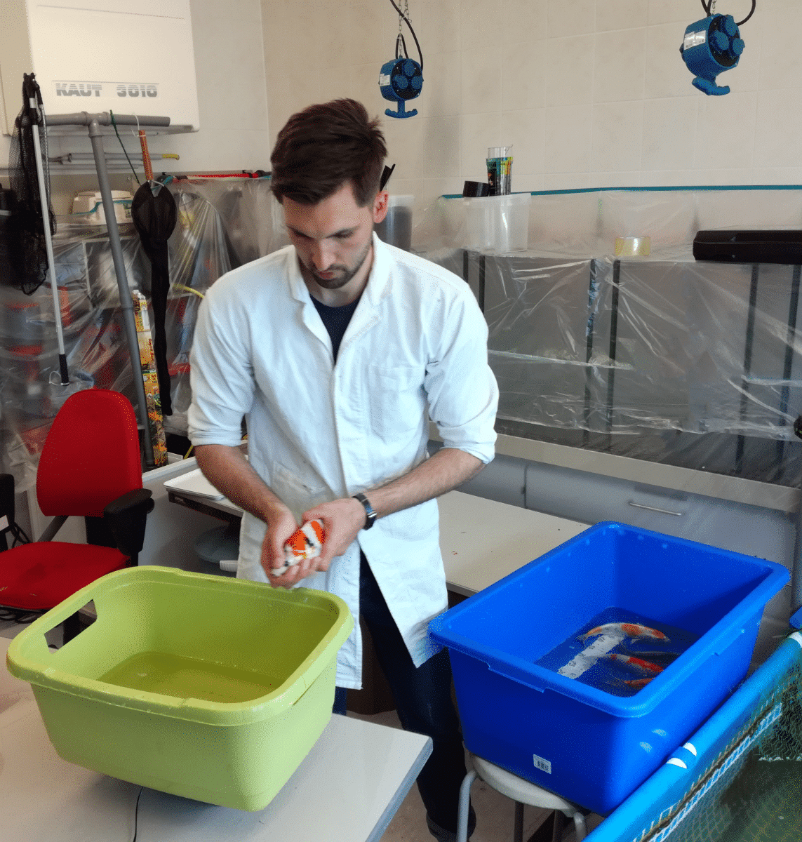 David Otto bei Fütterungsversuch mit Koifutter Nutramare Koi360